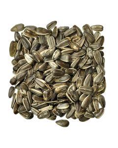 Medium Black Sunflower Seed